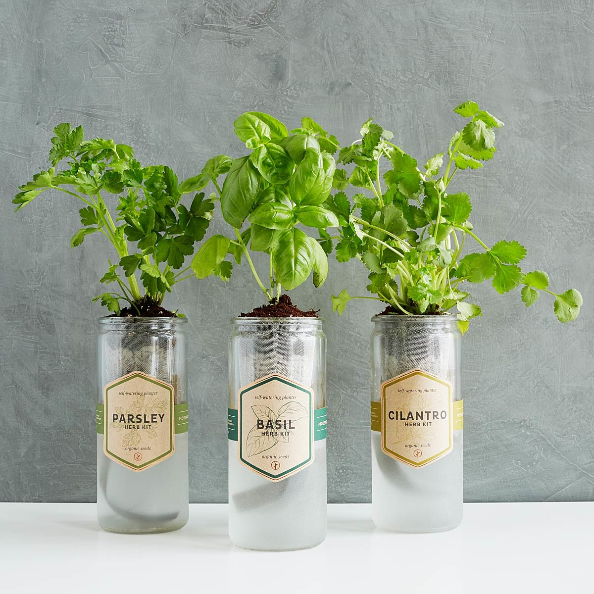 Herb Kits For Indoors: Kitchen Essentials Herb Planter