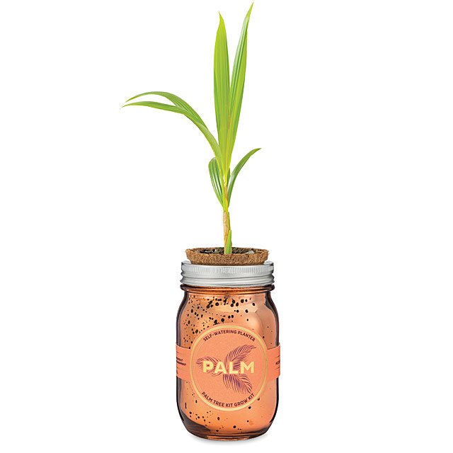 Palm Tree Grow Kit