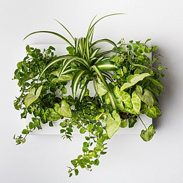 Hanging Garden Wall Planter