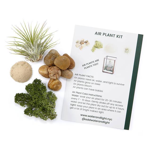 Air Plant Terrarium Kit Indoor Garden Kit Plant Accessories