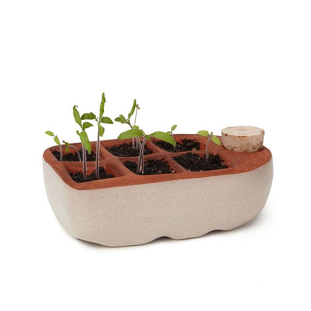 Self Watering Seedling Starter Seed Starter Uncommon Goods