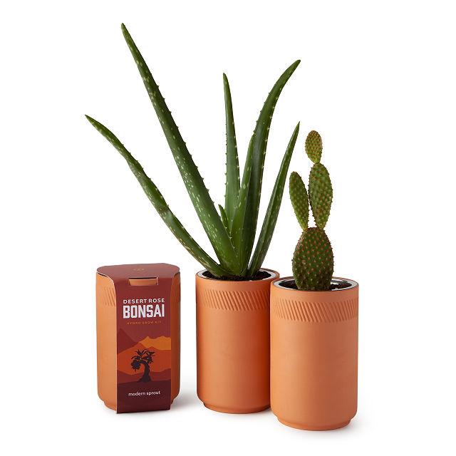 Bonsai Flower Grass Succulents Tool Kit Home Garden OK