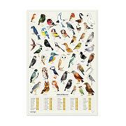 Birds Of Interest Scratch Off Chart