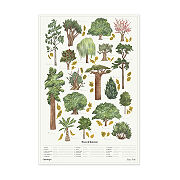 Trees Of Interest Scratch Off Chart