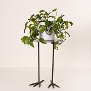 Bird Legs Plant Stand