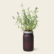 Mason Jar Lavender Grow Kit