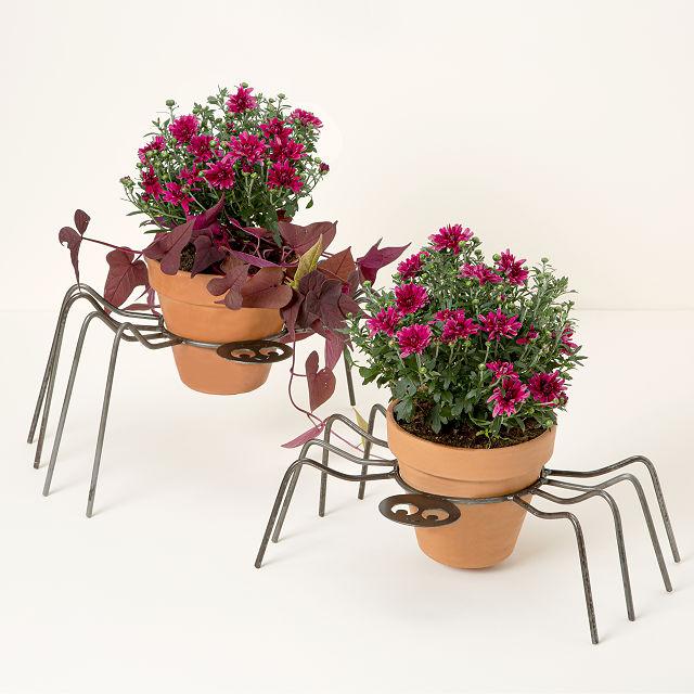 蜘蛛南瓜花盆架