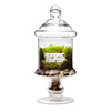 Life is Beautiful Terrarium